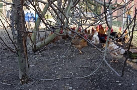 13 - pollaio 2.jpg