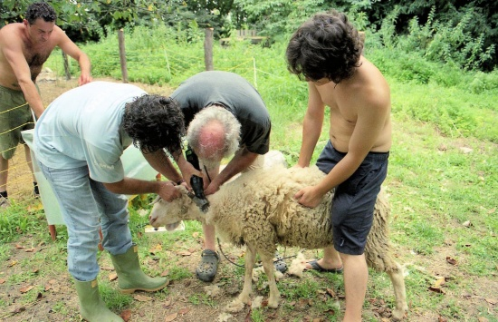 pecore feltro 1.jpg