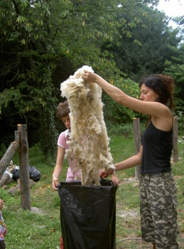 pecore feltro 2.jpg